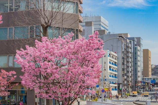新横浜ボイトレ
